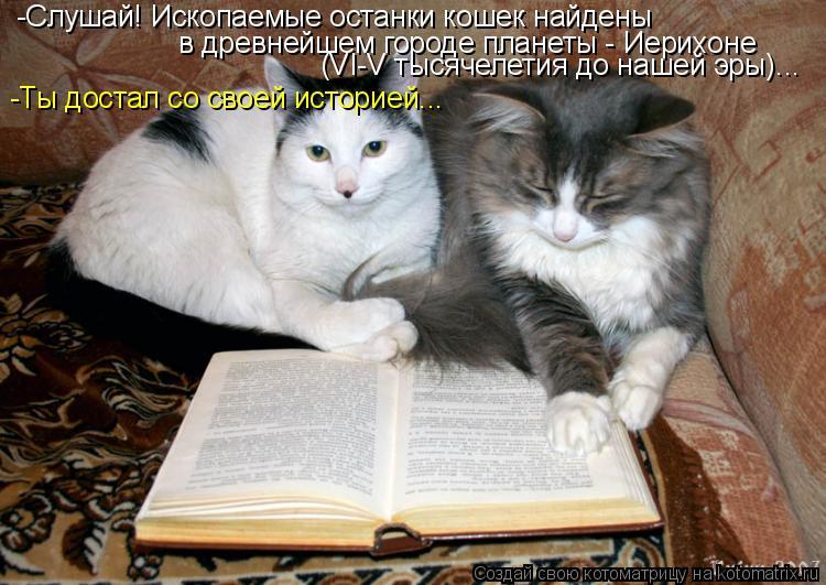 Котоматрица: -Слушай! Ископаемые останки кошек найдены  в древнейшем городе планеты - Иерихоне  (VI-V тысячелетия до нашей эры)... -Ты достал со своей историе