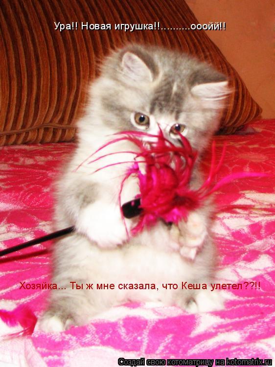 Котоматрица: Хозяйка... Ты ж мне сказала, что Кеша улетел??!! Ура!! Новая игрушка!!..........ооойй!!