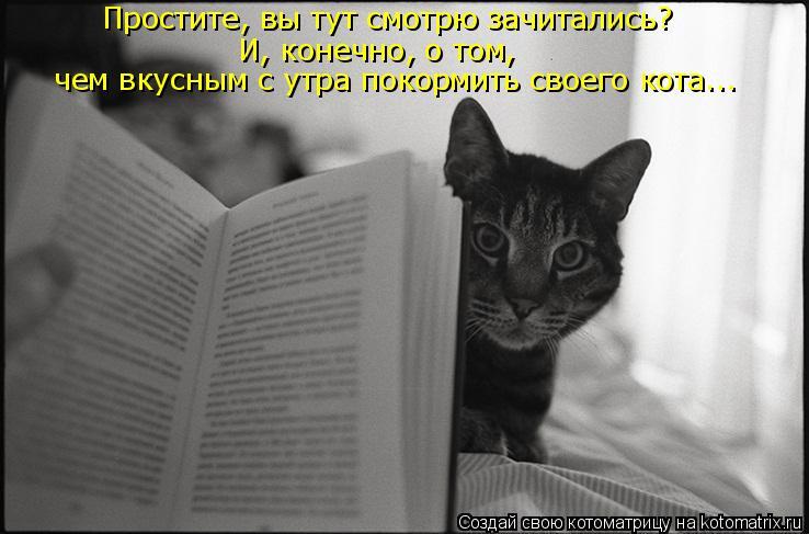 Котоматрица: Простите, вы тут смотрю зачитались?  И, конечно, о том,  чем вкусным с утра покормить своего кота...