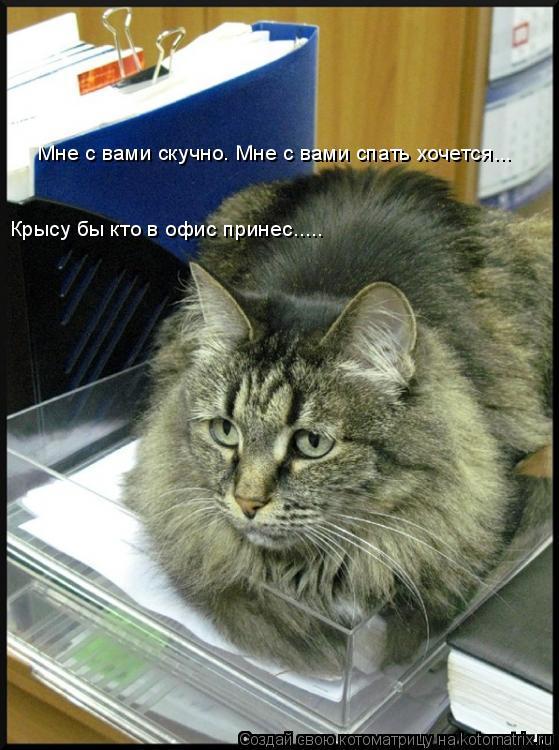 Котоматрица: Мне с вами скучно. Мне с вами спать хочется... Крысу бы кто в офис принес.....