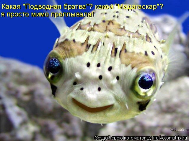 """Котоматрица: Какая """"Подводная братва""""? какой """"Мадагаскар""""? я просто мимо проплывала!"""