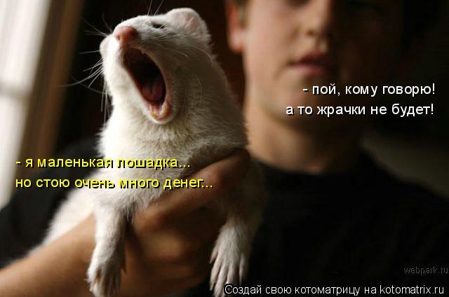Котоматрица: - пой, кому говорю! а то жрачки не будет! - я маленькая лошадка... но стою очень много денег...