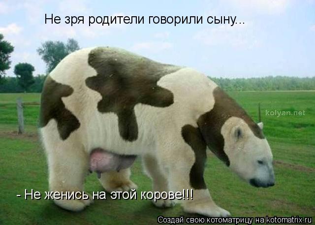 Котоматрица: Не зря родители говорили сыну... - Не женись на этой корове!!!