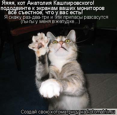 Котоматрица: Яяяя, кот Анатолия Кашпировского! пододвинте к экранам ваших мониторов всё съестное, что у вас есть! Я скажу раз-два-три и эти припасы разсас