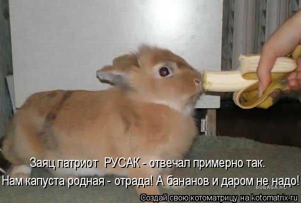 Котоматрица: Нам капуста родная - отрада! А бананов и даром не надо! Заяц патриот  РУСАК - отвечал примерно так.