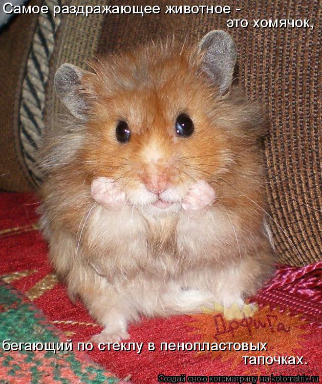 Котоматрица: Самое раздражающее животное -   это хомячок, бегающий по стеклу в пенопластовых тапочках.