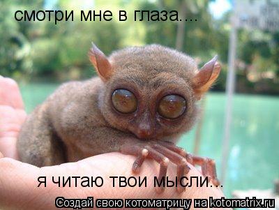 Котоматрица: смотри мне в глаза.... я читаю твои мысли...