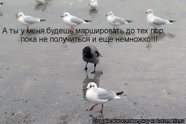 Котоматрица: А ты у меня будешь маршировать до тех пор,  пока не получиться и еще немножко!!!