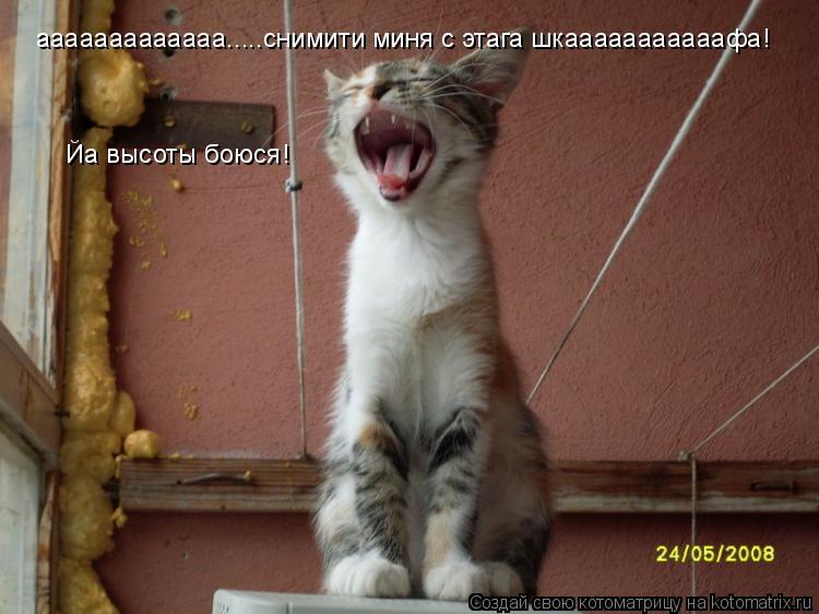 Котоматрица: ааааааааааааа.....снимити миня с этага шкааааааааааафа! Йа высоты боюся!
