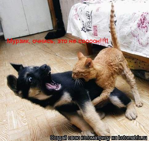 Котоматрица: Мурзик, очнись, это не соооон!!!!