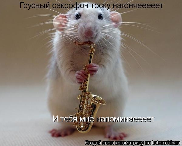 Котоматрица: Грусный саксофон тоску нагоняееееет И тебя мне напоминаеееет