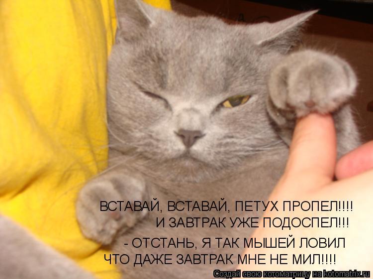 Котоматрица: ВСТАВАЙ, ВСТАВАЙ, ПЕТУХ ПРОПЕЛ!!!! И ЗАВТРАК УЖЕ ПОДОСПЕЛ!!!  - ОТСТАНЬ, Я ТАК МЫШЕЙ ЛОВИЛ ЧТО ДАЖЕ ЗАВТРАК МНЕ НЕ МИЛ!!!!