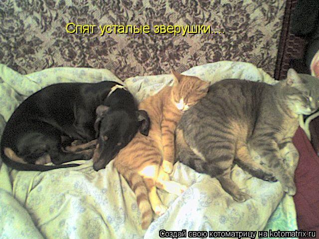 Котоматрица: Спят усталые зверушки....