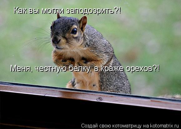 Котоматрица: Меня, честную белку, в краже орехов?! Как вы могли заподозрить?!