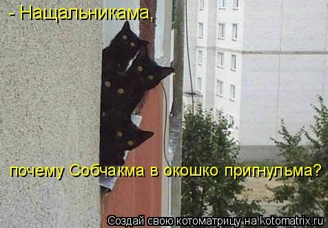 Котоматрица: - Нащальникама,  почему Собчакма в окошко пригнульма?