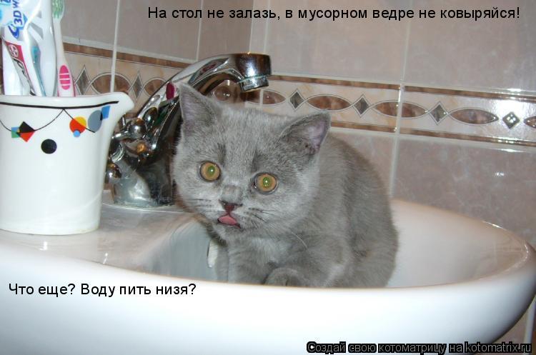 Котоматрица: На стол не залазь, в мусорном ведре не ковыряйся! Что еще? Воду пить низя?