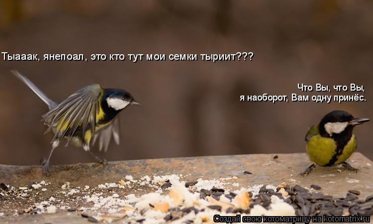 Котоматрица: Тыааак, янепоал, это кто тут мои семки тыриит??? Что Вы, что Вы,   я наоборот, Вам одну принёс.