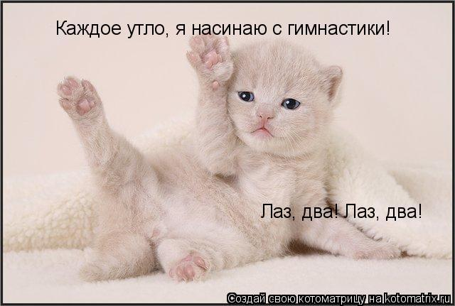 Котоматрица: Лаз, два! Лаз, два! Каждое утло, я насинаю с гимнастики!