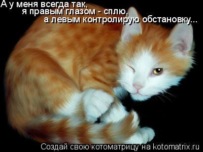 Котоматрица: А у меня всегда так, я правым глазом - сплю,  а левым контролирую обстановку...
