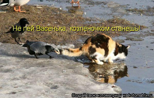 Котоматрица: Не пей Васенька, козленочком станешь!