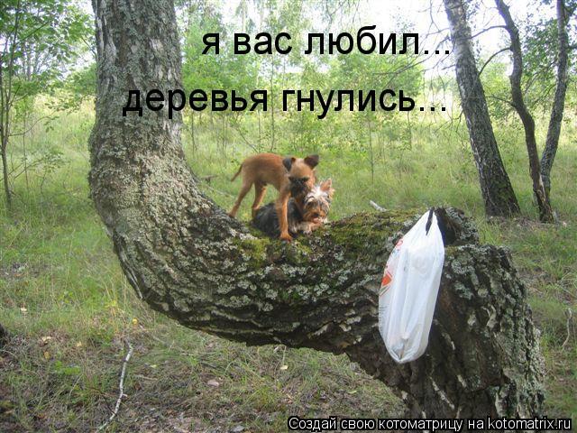 Котоматрица: я вас любил... деревья гнулись...
