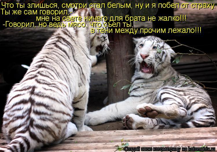 Котоматрица: Что ты злишься, смотри стал белым, ну и я побел от страху. Ты же сам говорил,-  мне на свете ничего для брата не жалко!!! -Говорил, но ведь мясо, ч