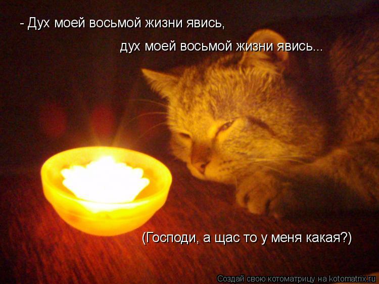 Котоматрица: - Дух моей восьмой жизни явись, дух моей восьмой жизни явись... (Господи, а щас то у меня какая?)