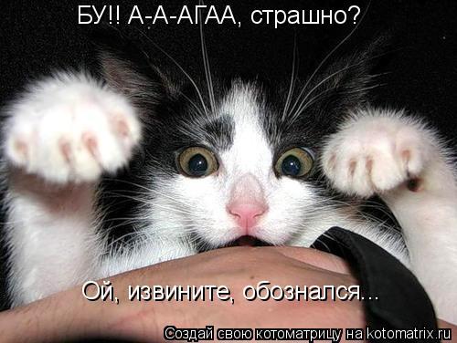 Котоматрица: БУ!! А-А-АГАА, страшно? Ой, извините, обознался...