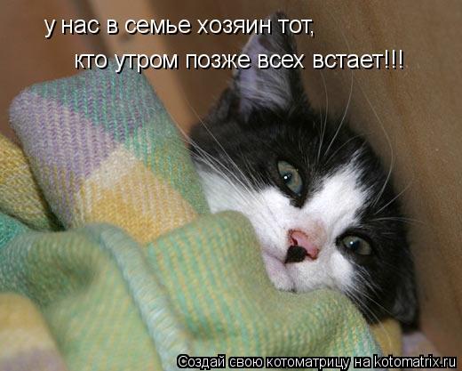 Котоматрица: у нас в семье хозяин тот, кто утром позже всех встает!!!