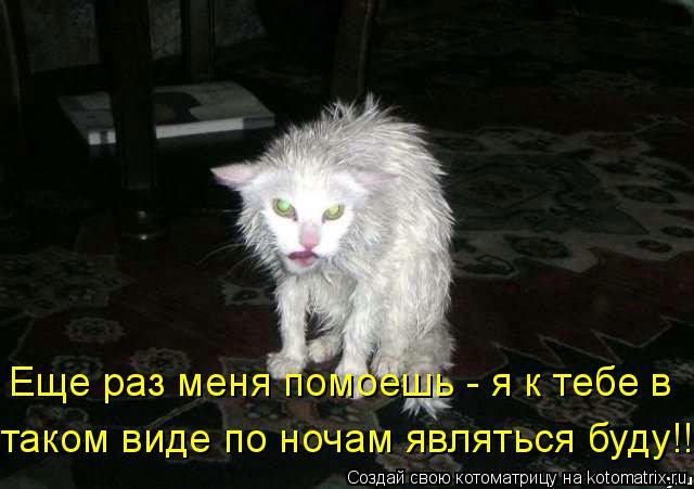 Котоматрица: Еще раз меня помоешь - я к тебе в  таком виде по ночам являться буду!!!