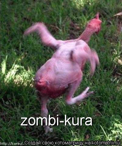 Котоматрица: zombi-kura