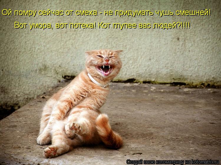 Котоматрица: Вот умора, вот потеха! Кот глупее вас людей?!!!! Ой помру сейчас от смеха - не придумать чушь смешней!