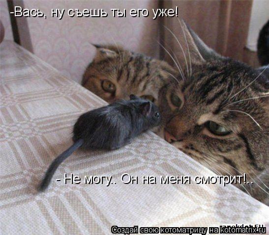 Котоматрица: -Вась, ну съешь ты его уже! - Не могу.. Он на меня смотрит!..