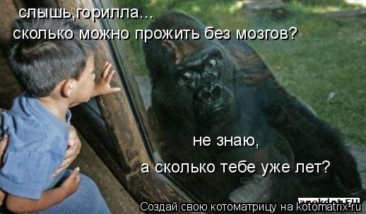 Котоматрица: слышь,горилла...  сколько можно прожить без мозгов? не знаю, а сколько тебе уже лет?