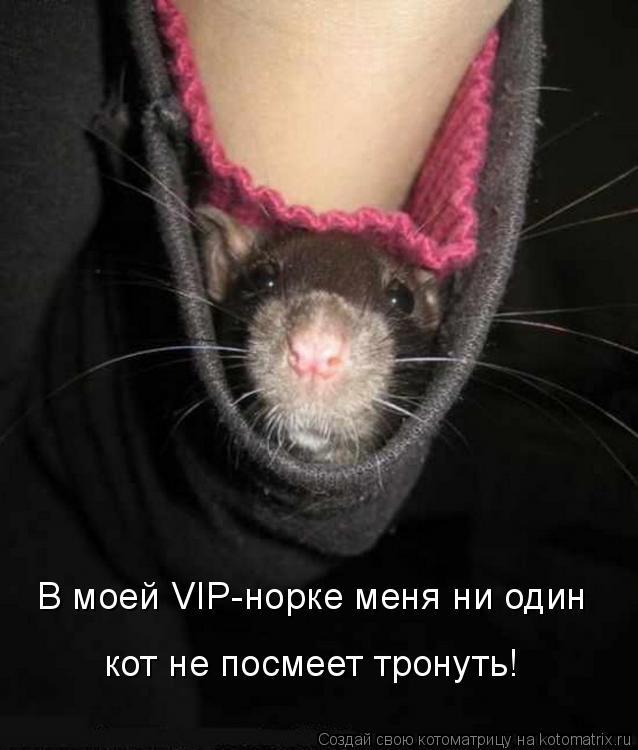 Котоматрица: В моей VIP-норке меня ни один кот не посмеет тронуть!