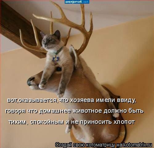 Котоматрица: вот,оказывается,что хозяева имели ввиду, говоря что домашнее животное должно быть тихим, спокойным и не приносить хлопот