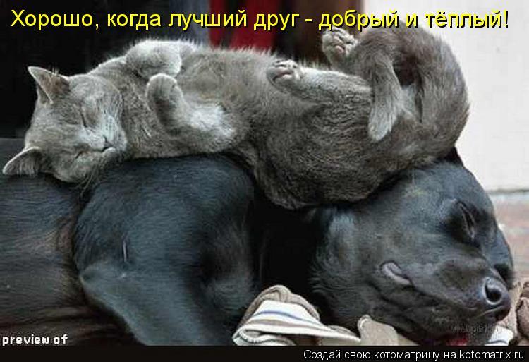 Котоматрица: Хорошо, когда лучший друг - добрый и тёплый!