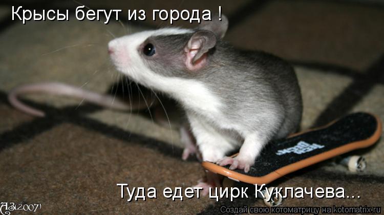 Котоматрица: Крысы бегут из города ! Туда едет цирк Куклачева...