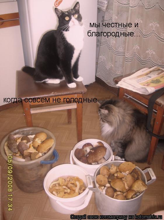 Котоматрица: мы честные и  благородные... когда совсем не голодные