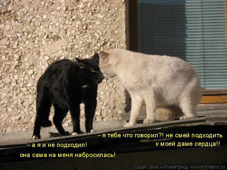 Котоматрица: - а я и не подходил! она сама на меня набросилась! - я тебе что говорил?! не смей подходить к моей даме сердца!!