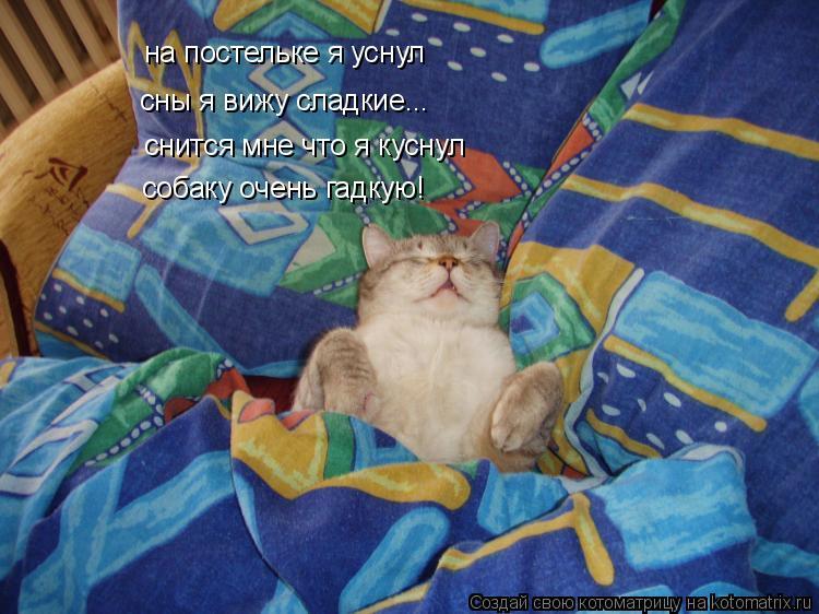 Котоматрица: на постельке я уснул сны я вижу сладкие... снится мне что я куснул собаку очень гадкую!