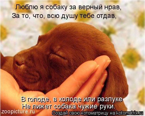 Котоматрица: Люблю я собаку за верный нрав,  За то, что, всю душу тебе отдав,  В голоде, в холоде или разлуке  Не лижет собака чужие руки.