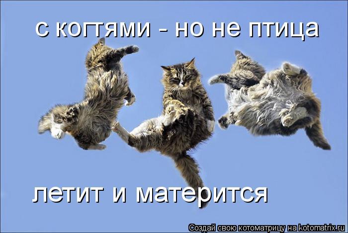 Котоматрица: с когтями - но не птица летит и матерится