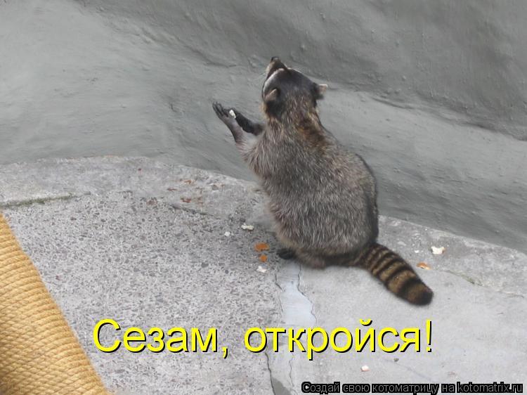 Котоматрица: Сезам, откройся!
