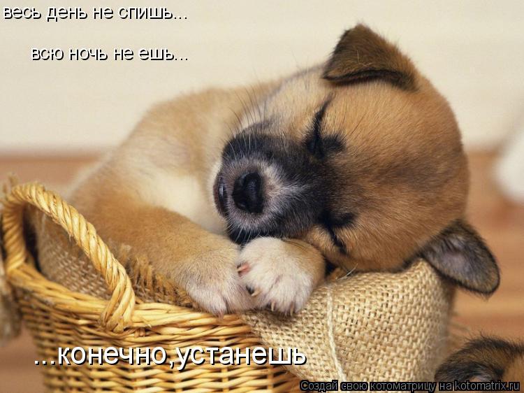 Котоматрица: весь день не спишь... всю ночь не ешь... ...конечно,устанешь