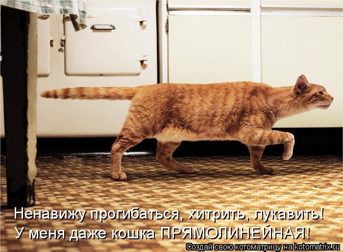 Котоматрица: Ненавижу прогибаться, хитрить, лукавить! У меня даже кошка ПРЯМОЛИНЕЙНАЯ!