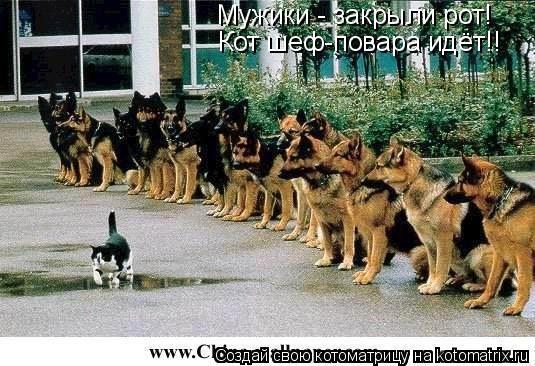 Котоматрица: Мужики - закрыли рот! Кот шеф-повара идёт!!