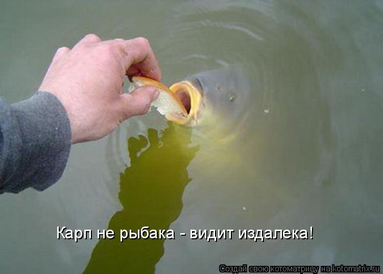 Котоматрица: Карп не рыбака - видит издалека!