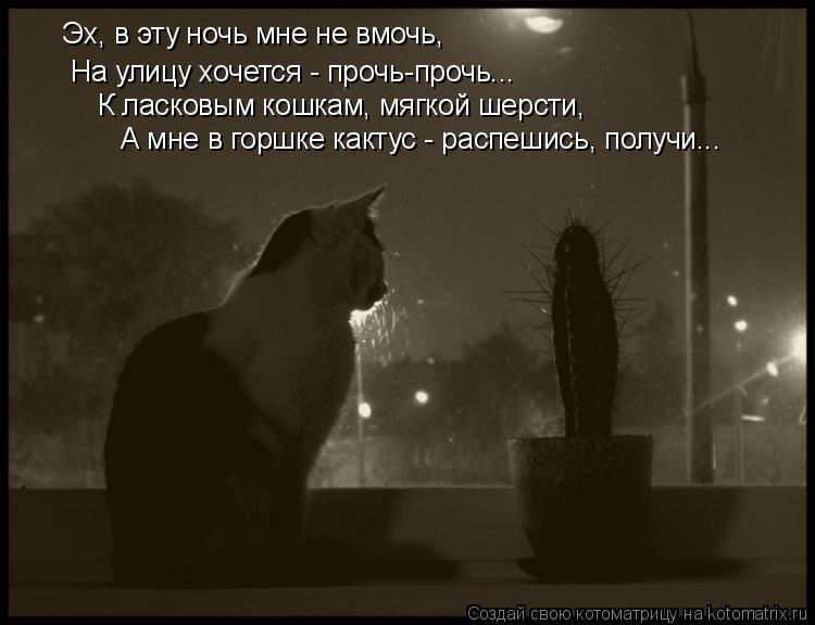 Котоматрица: Эх, в эту ночь мне не вмочь, На улицу хочется - прочь-прочь... К ласковым кошкам, мягкой шерсти, А мне в горшке кактус - распешись, получи...