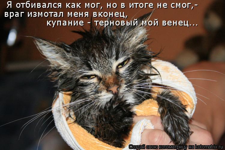 Котоматрица: Я отбивался как мог, но в итоге не смог,- враг измотал меня вконец,  купание - терновый мой венец...